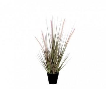 DOGTAIL GRAS VIOLET POT  H53CM