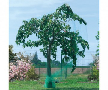 ACAULIS EN PANIER X3 PLANTS