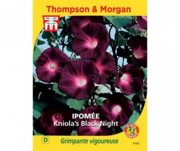 IPOMEE KNIOLA'S BLACK NIGHT