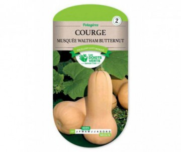 COURGE MUSQUEE WALTHAM BUTTERNUT LES DOIGTS VERTS